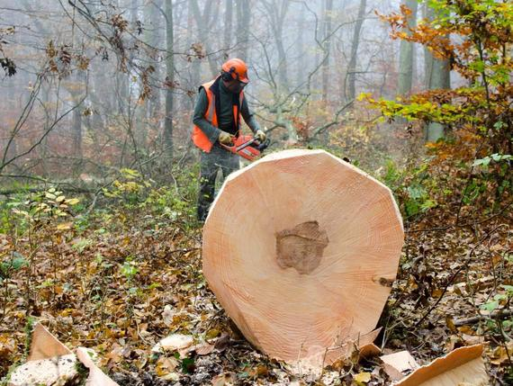Metsä on pitkän aikavälin sijoituskohde. Metsää perivä Janne Ainamo on jo  pohtinut 80e0b46cd1