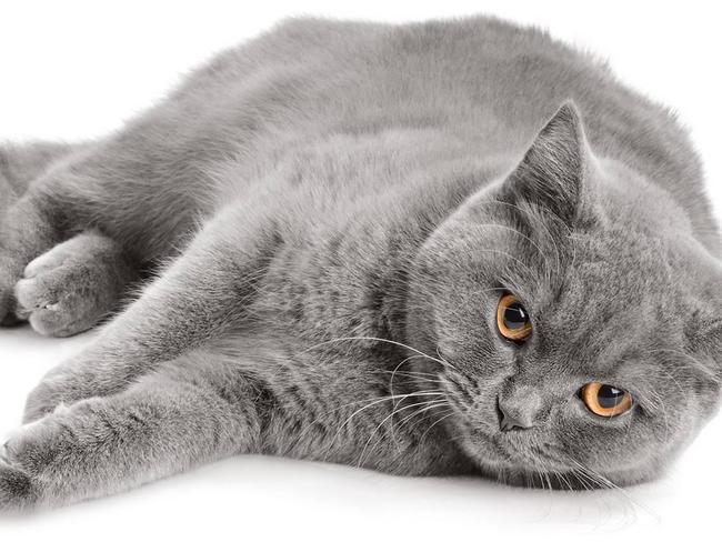 Kissan Kehräys