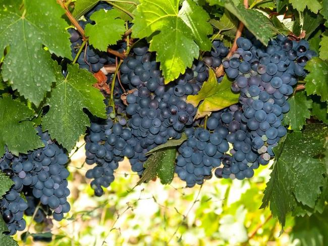Avattu Viinipullo