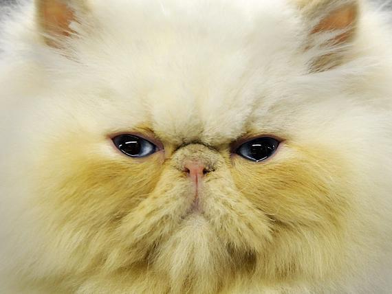 Kissan Masennus
