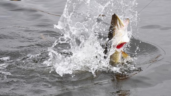 milloin tarvitaan kalastuslupa