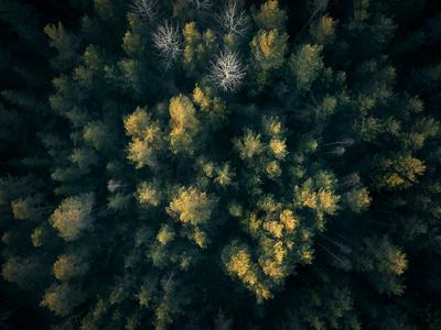 Metsärahastot