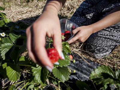 www.talouselama.fi